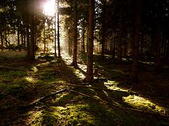"""""""Light in the dark forest""""  by  net_efekt"""