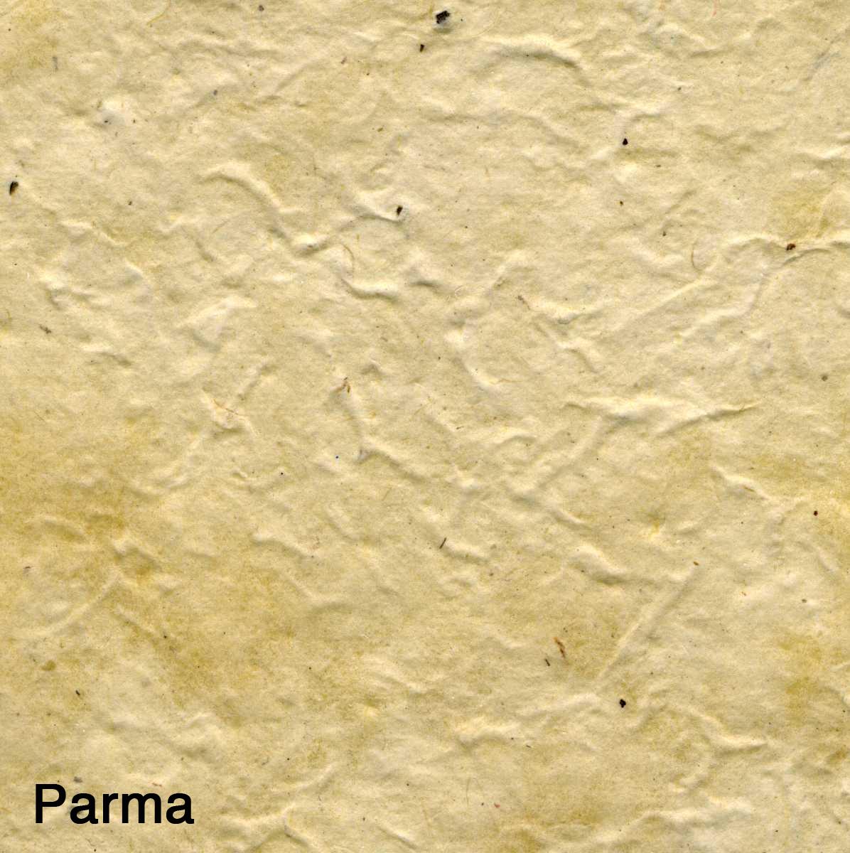 Parma001.jpg
