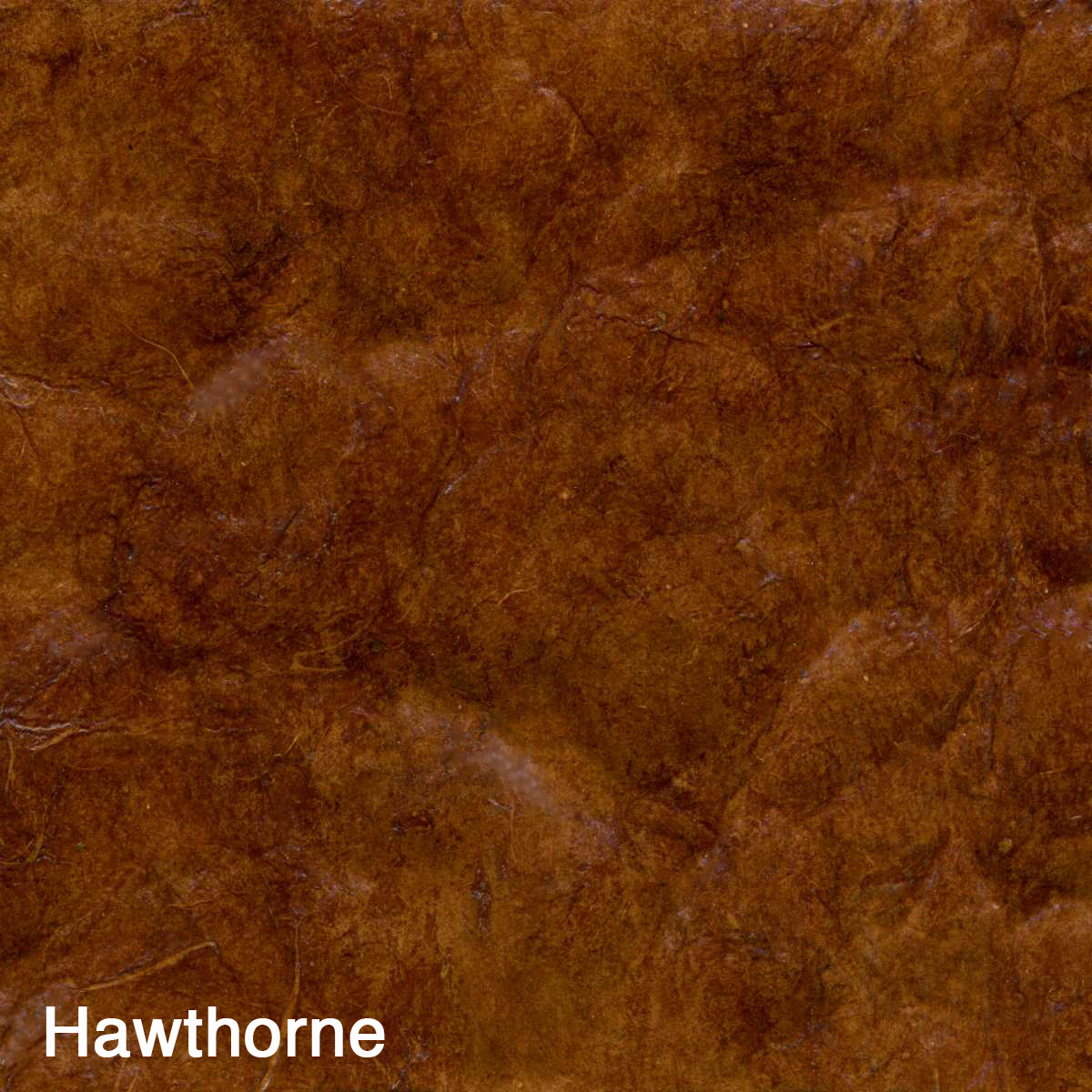 Hawthorne copy copy.jpg