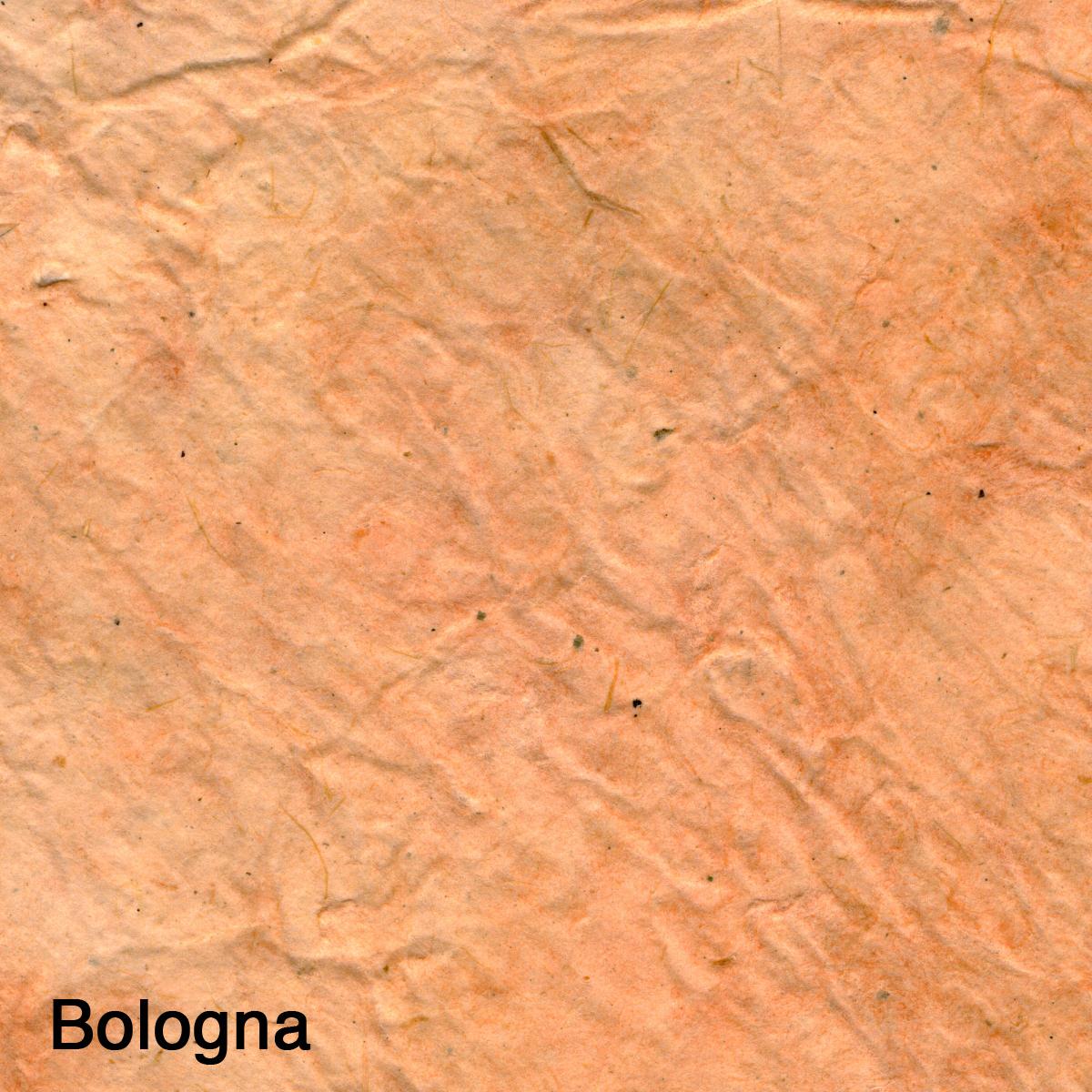 Bolagna004.jpg