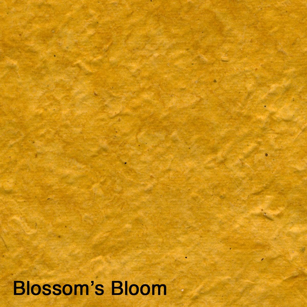 Blossom's Bloom.jpg