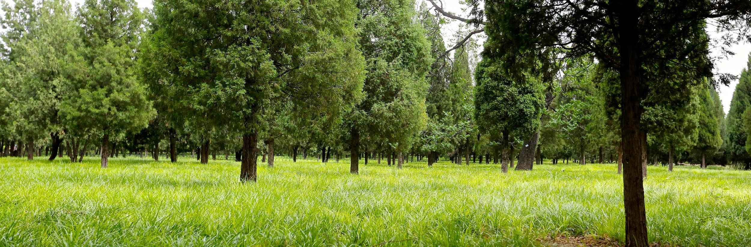 Travel in Beijing:TianTan garden.JPG