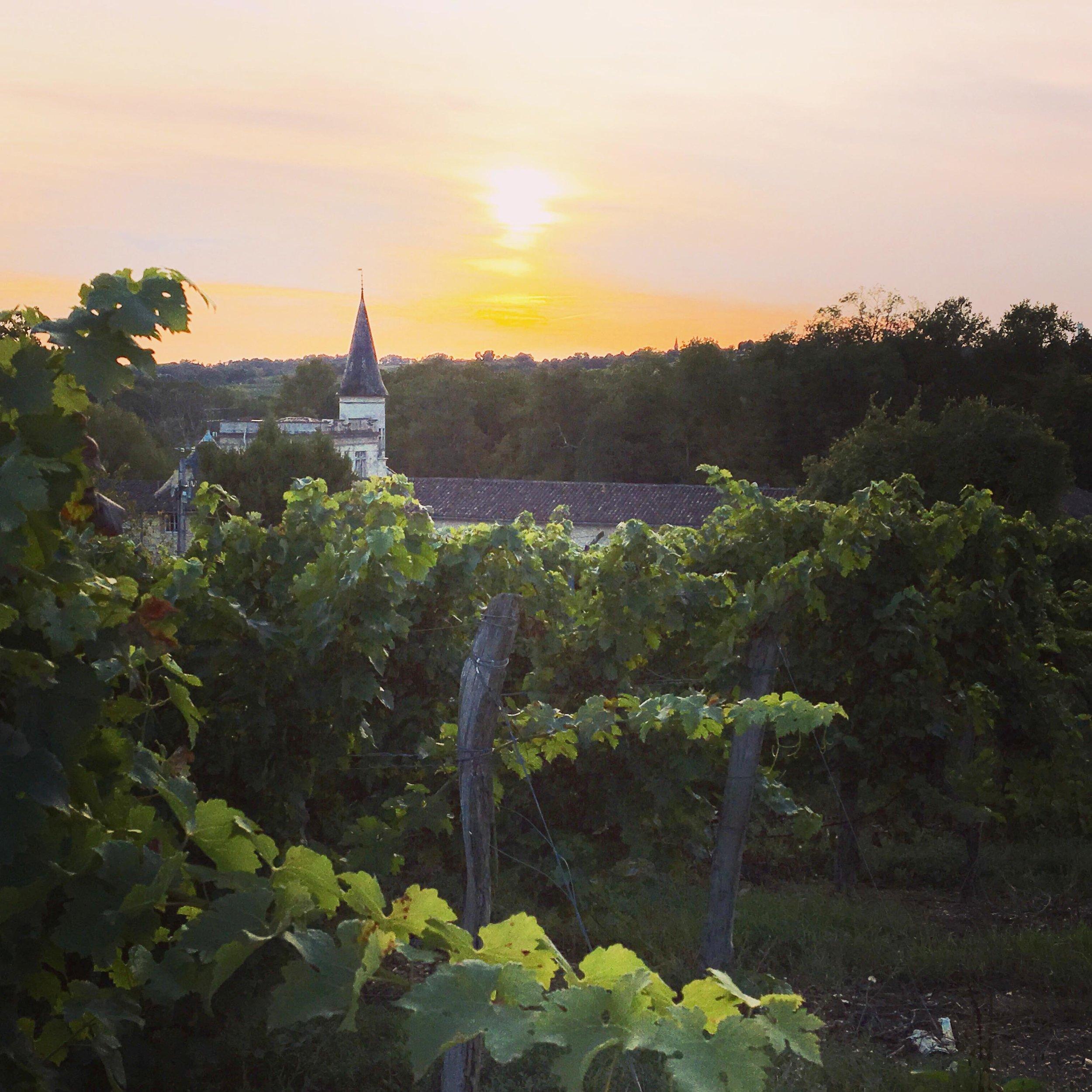 Chateau Lagorc bordeaux wineyard.JPG