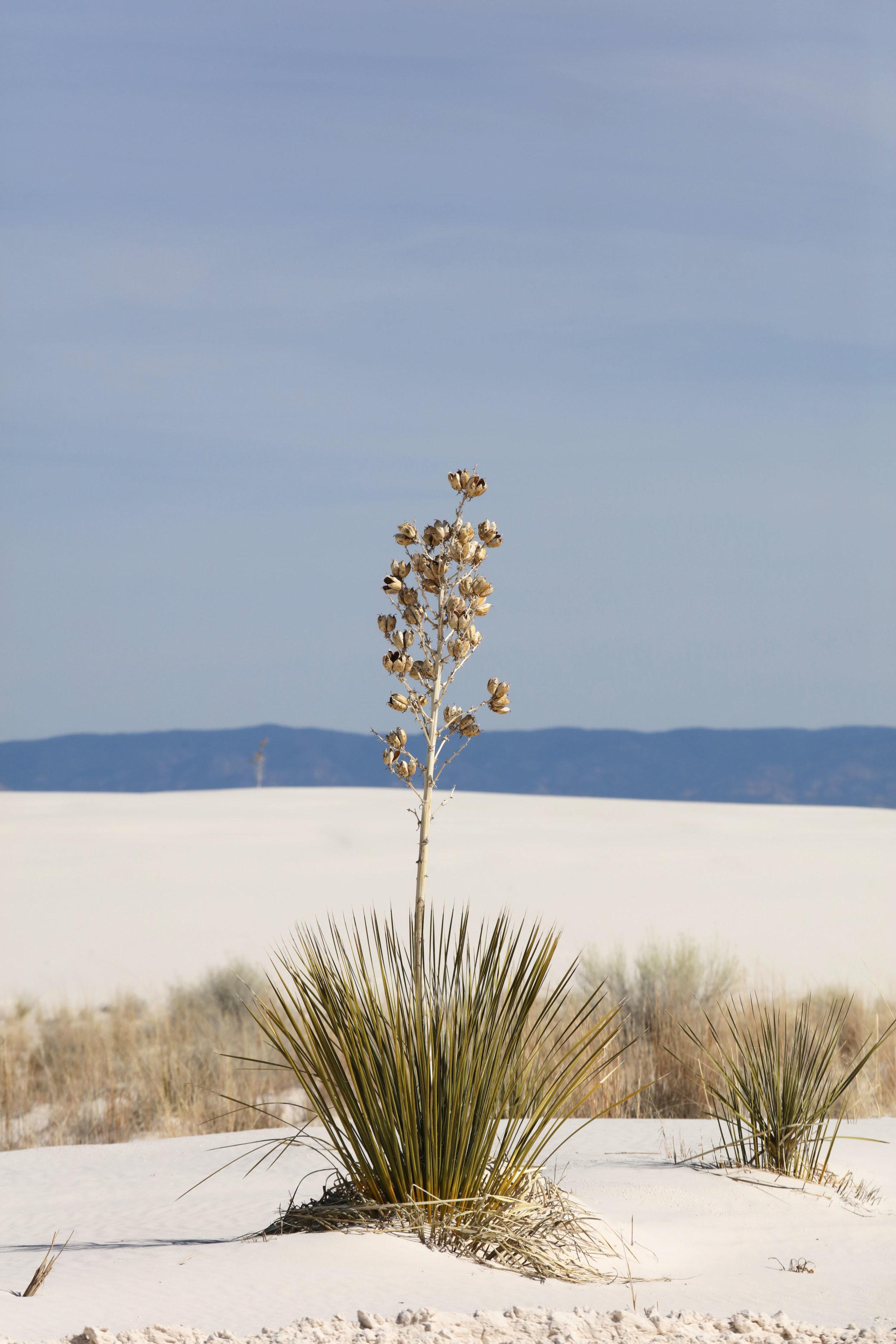 White Sands National Monument 0.JPG