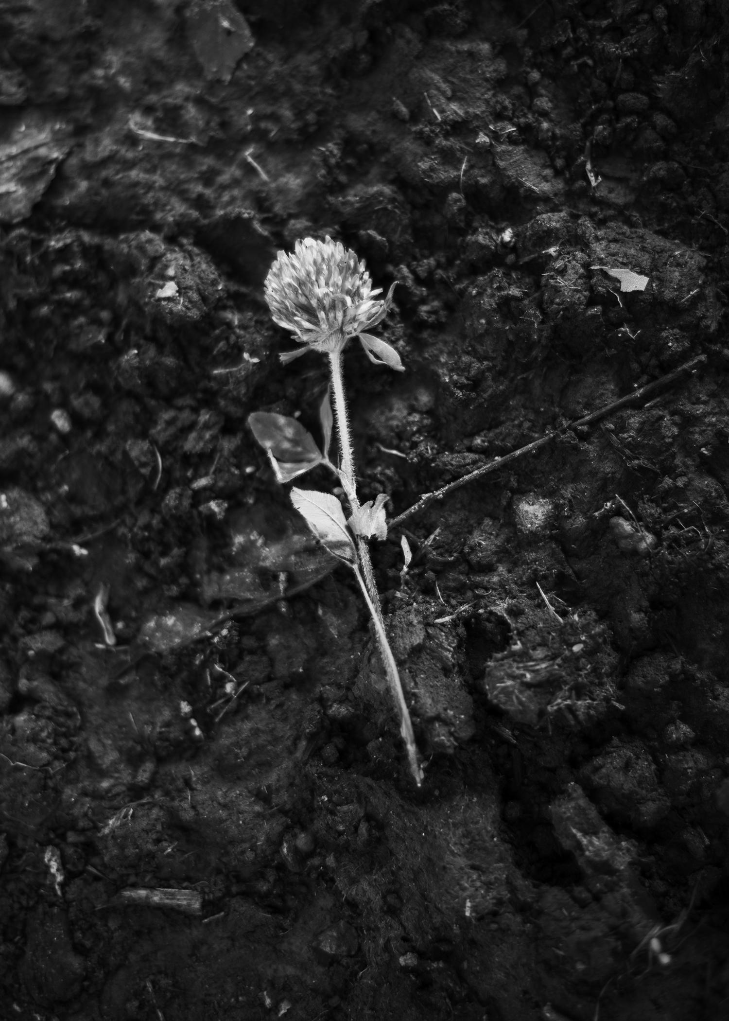 flower 5x7.jpg