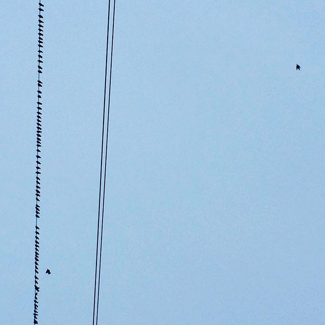 Lines, birds, sky.  #nycdesign #fly