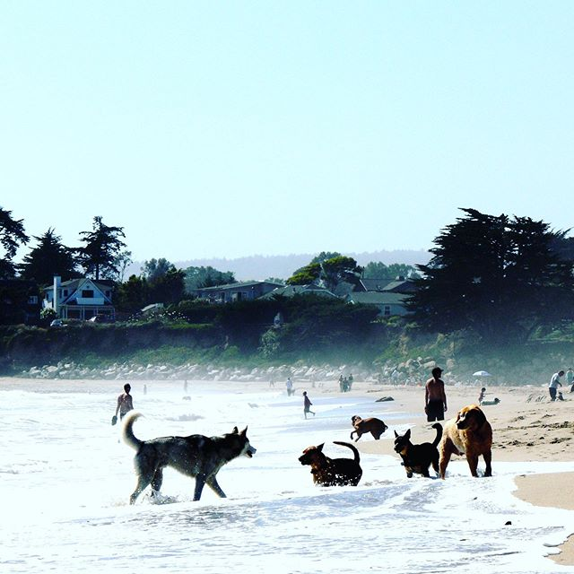 #california #dogsofinstagram