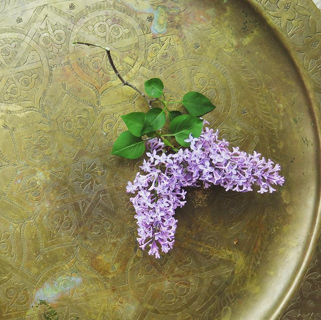 spring still life for @sacredvibesapothecary #brooklyn #lilacs