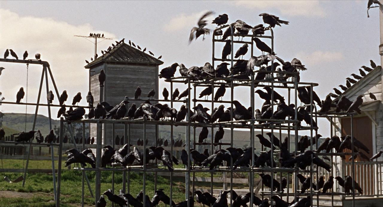 49. The Birds (1963)