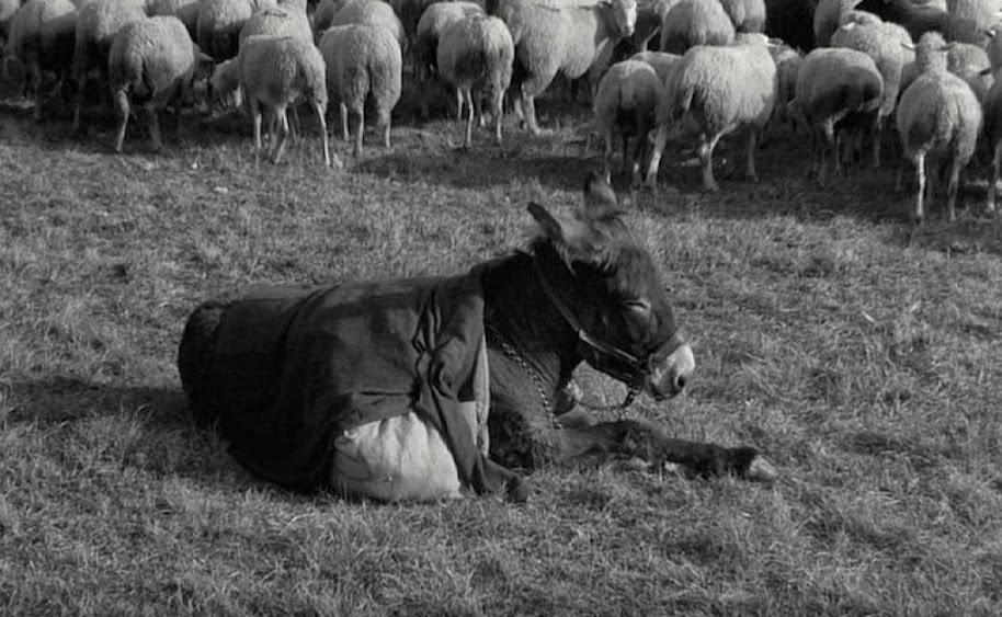 181. Au Hasard Balthazar (1966)