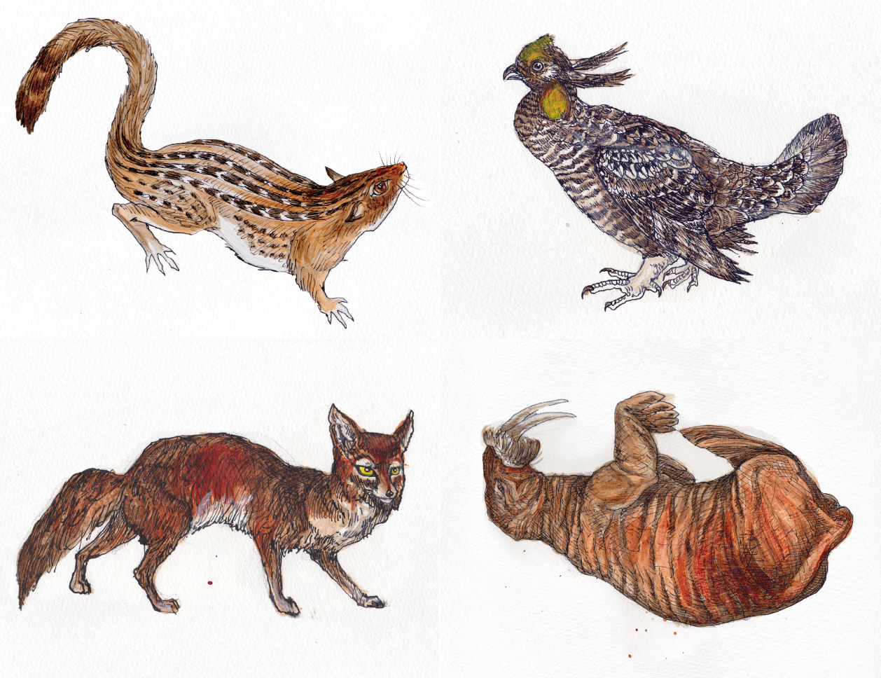 Four wildlife postcards with which to respectfully harass your Members of Congress.