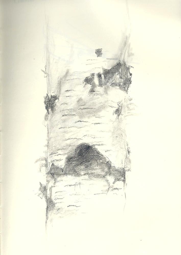 BirchSketch.jpg