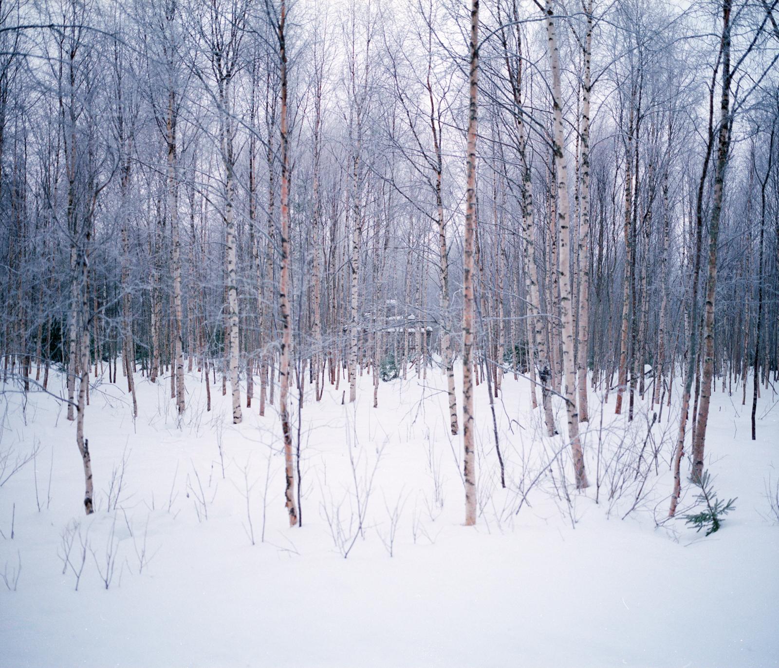 Lapland-9.jpg