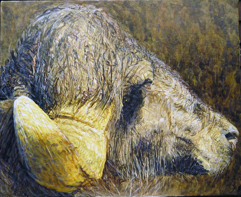 buffalo portrait 1984 oil 24x24