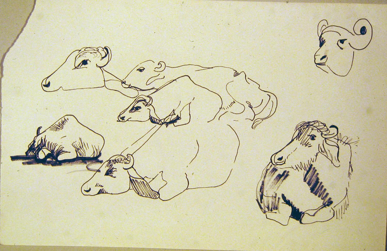 water buffalo 1972 pencil 9x12