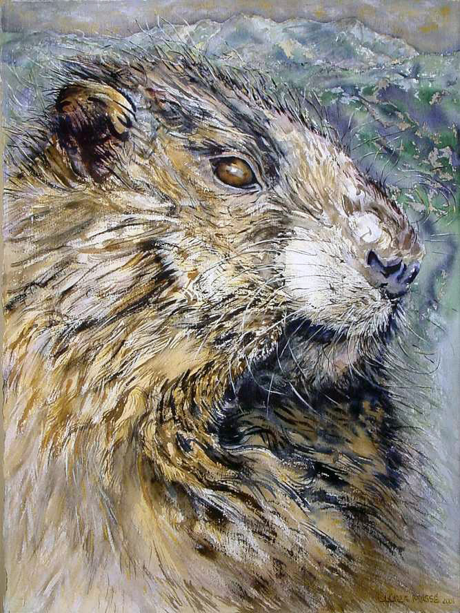 whistling marmot 2001 watercolor 30x22
