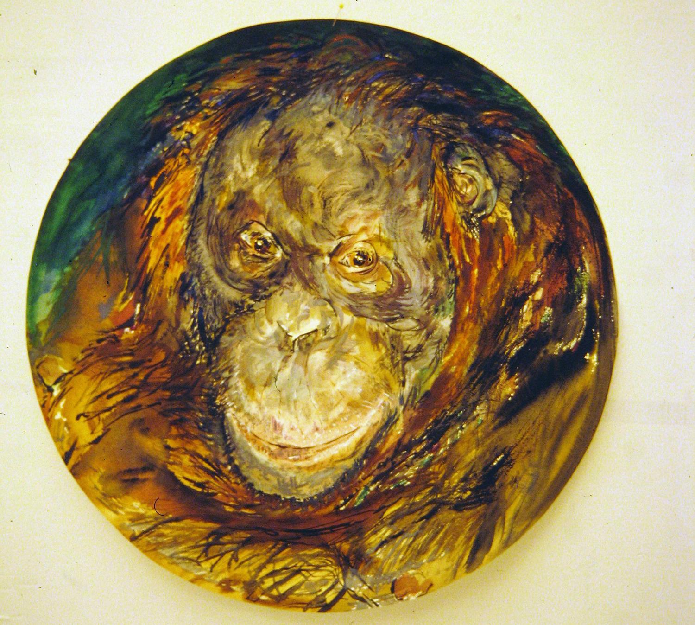 adult orangutan 1994 watercolour 23in diameter (18)