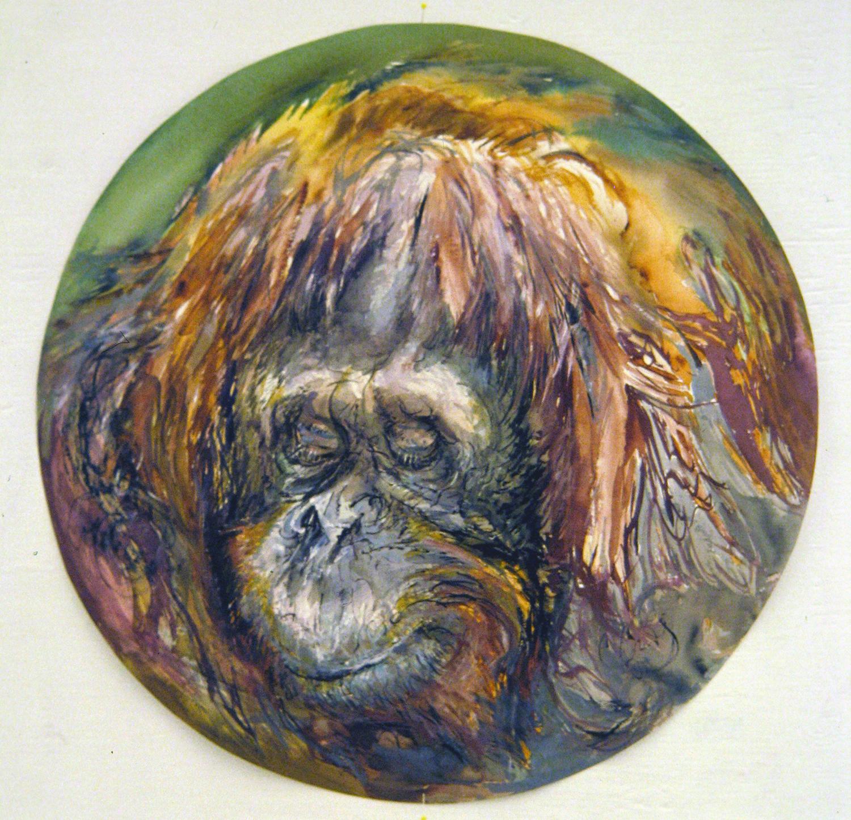 adult orangutan 1994 watercolour 23in diameter (15)