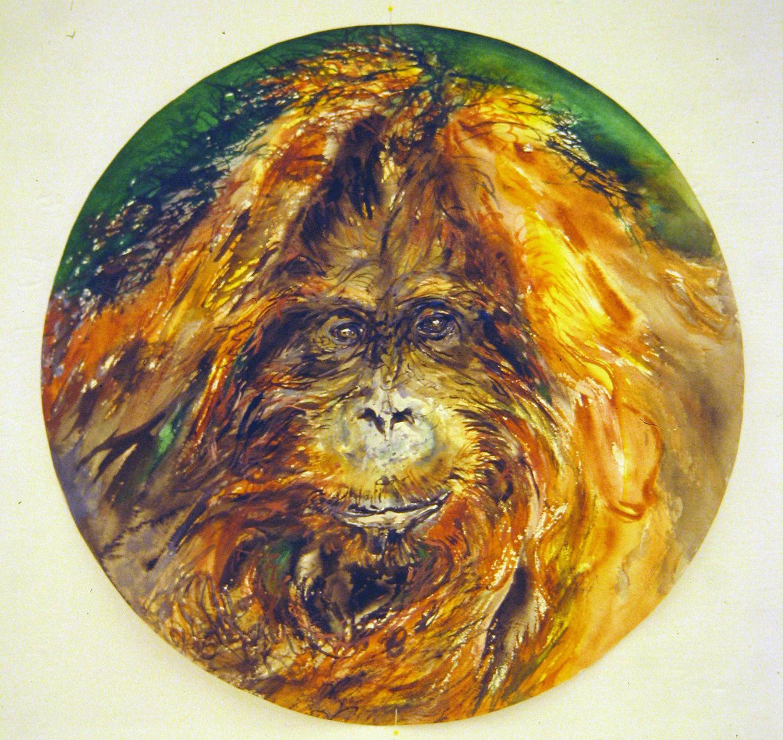 adult orangutan 1994 watercolour 23in diameter (11)