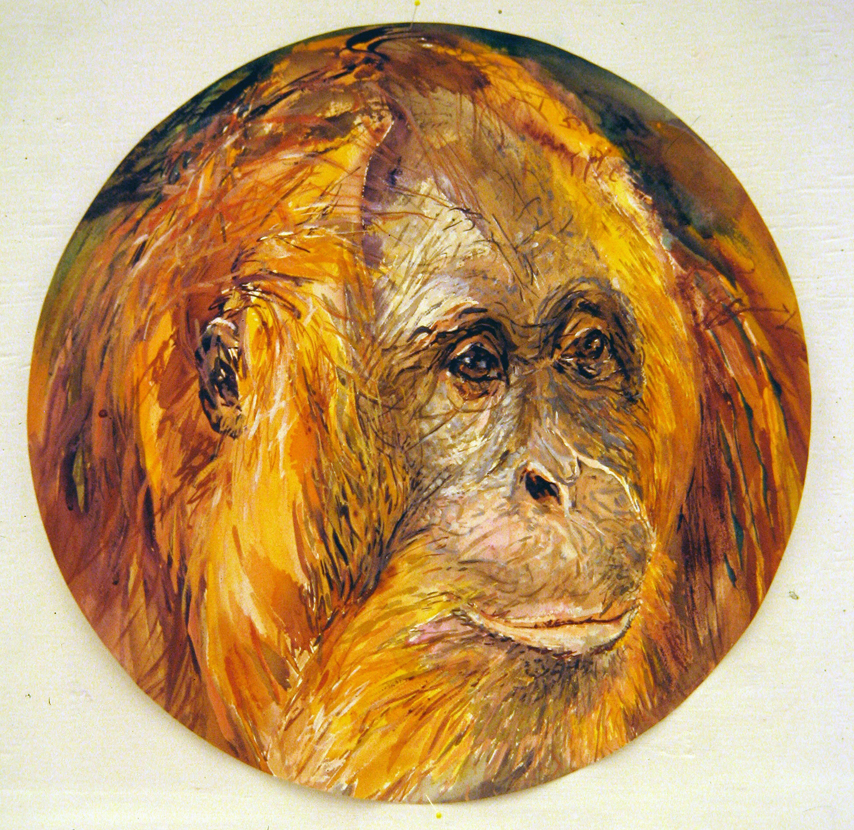 adult orangutan 1994 watercolour 23in diameter (7)
