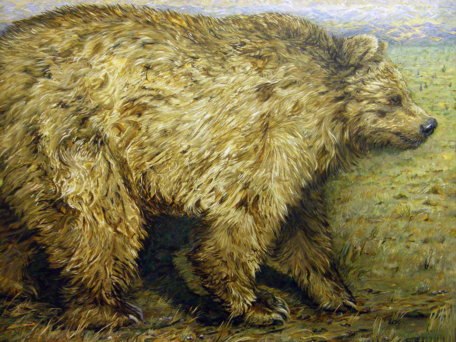 a grizzly can roam over a thousand miles 2008 acrylic 52x44