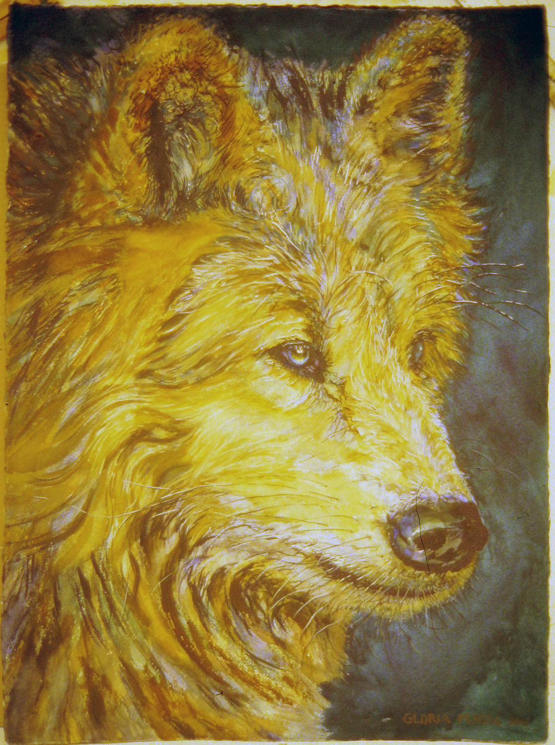 young wolf with deep turqoise  2003 watercolour 30x22