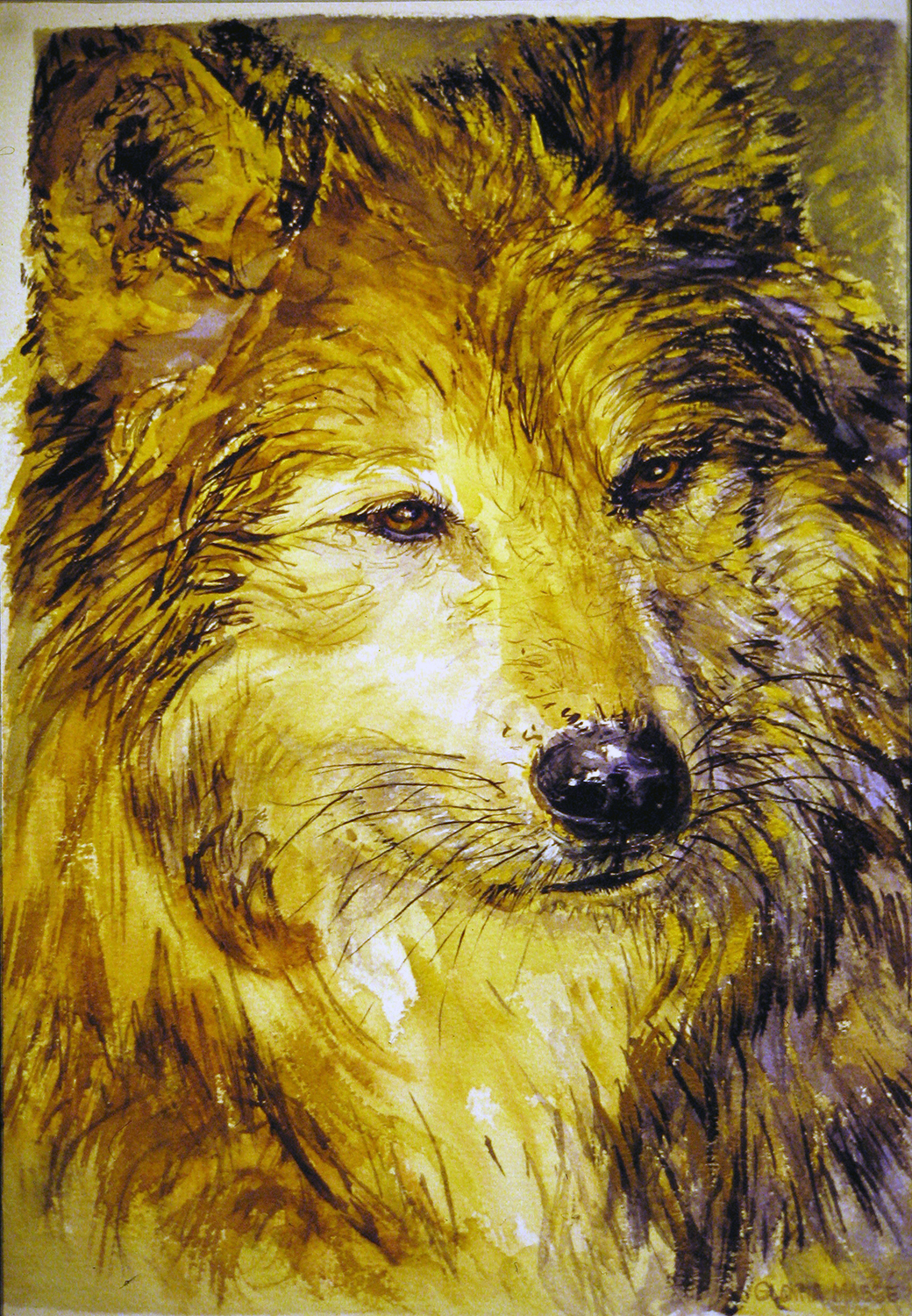 golden wolf 1998 watercolour 20x13