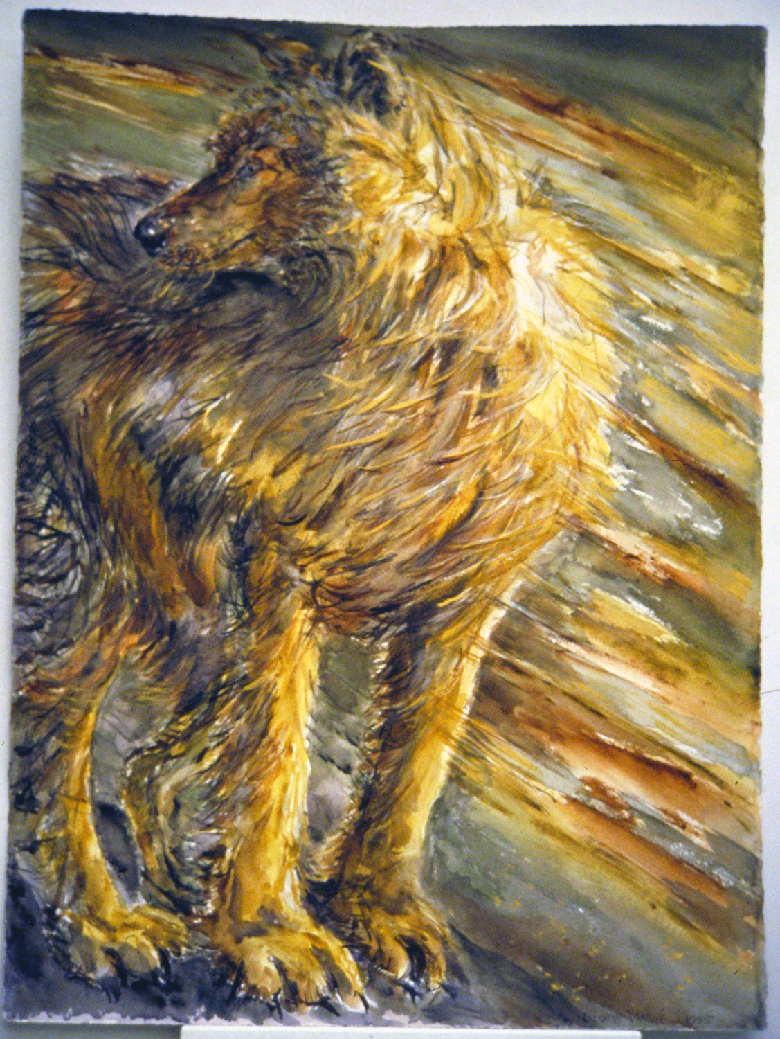 wind wolf 1995 watercolour 30x22