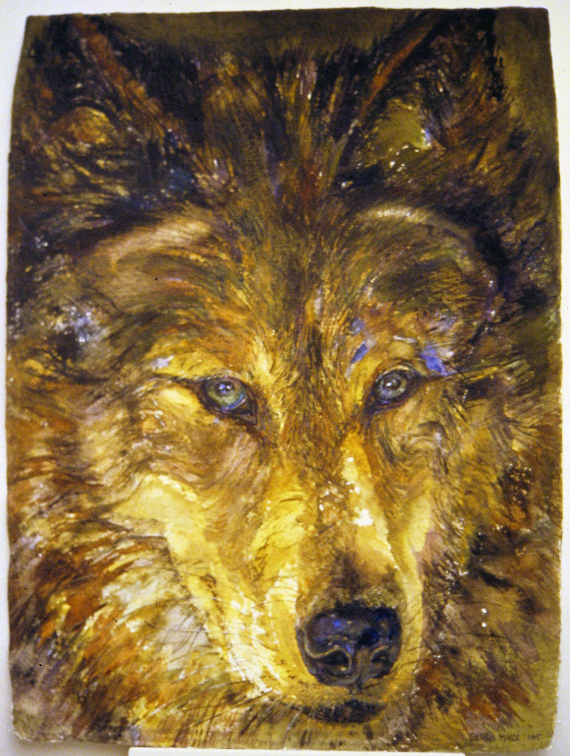 timber wolf 1995 watercolour 30x22