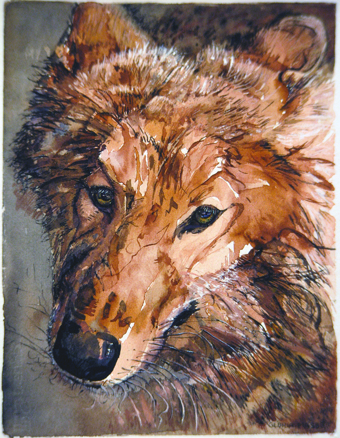 yearling wolf pink 1994 watercolour 13x10