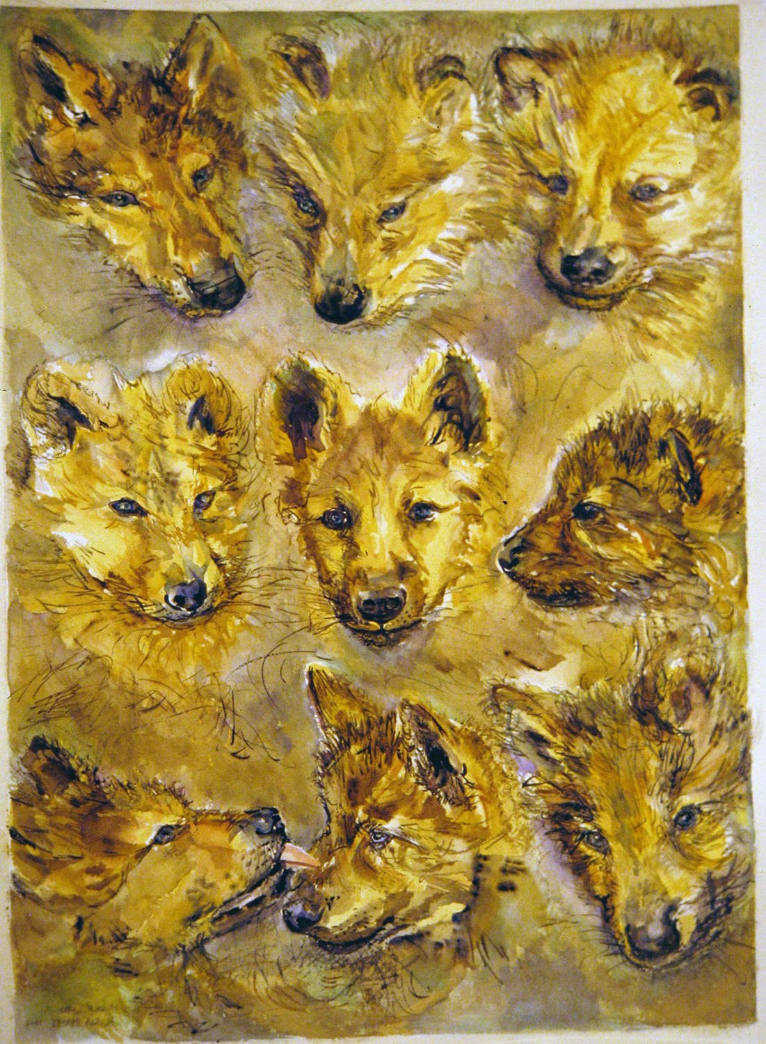 wolf cubs 1994 watercolour 30x22