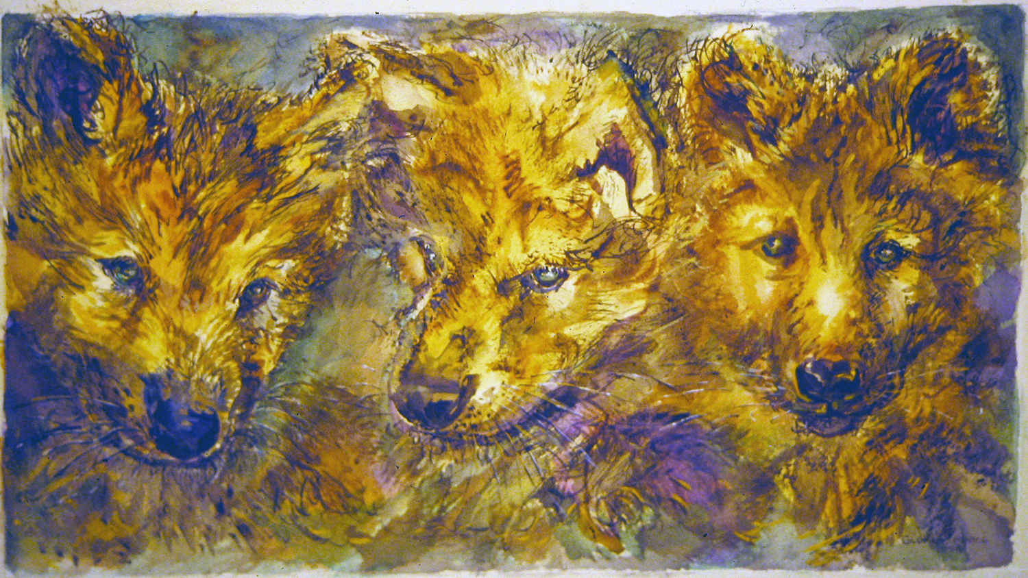 3 wolf cubs 1994 watercolour 15x22