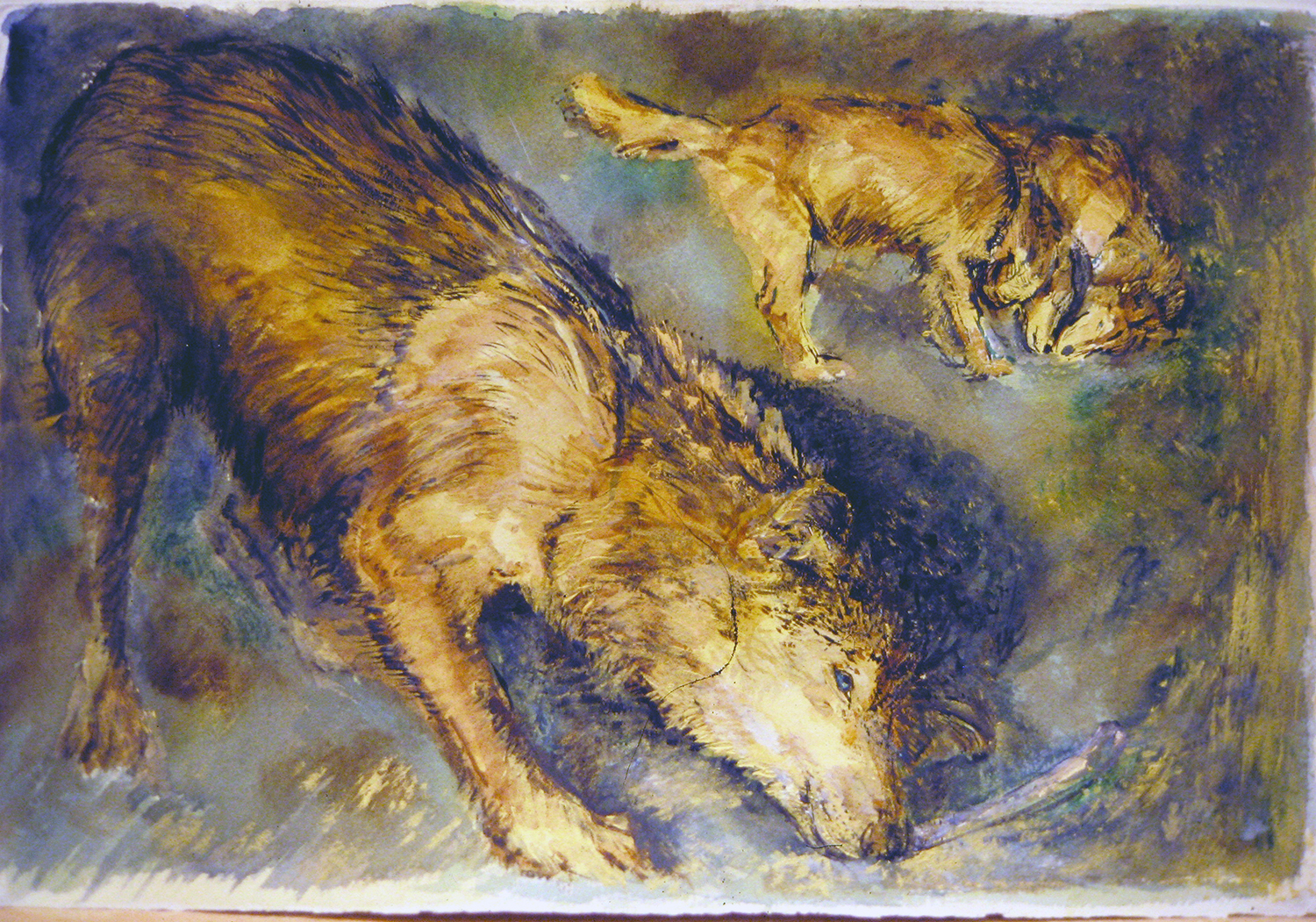 wolves at play 1991 watercolour 15x22
