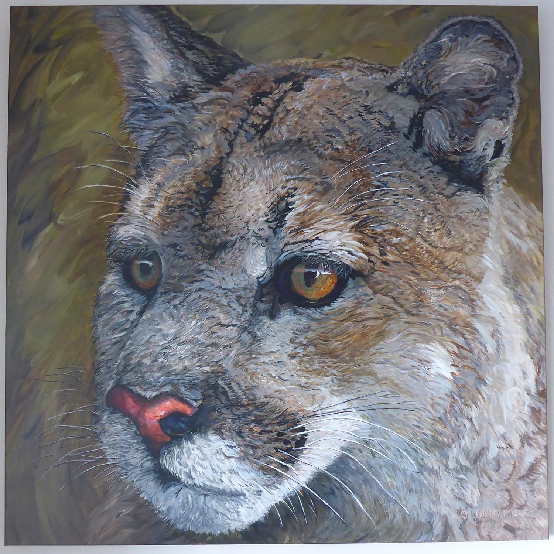 cougar watch 2017 acrylic 36x36
