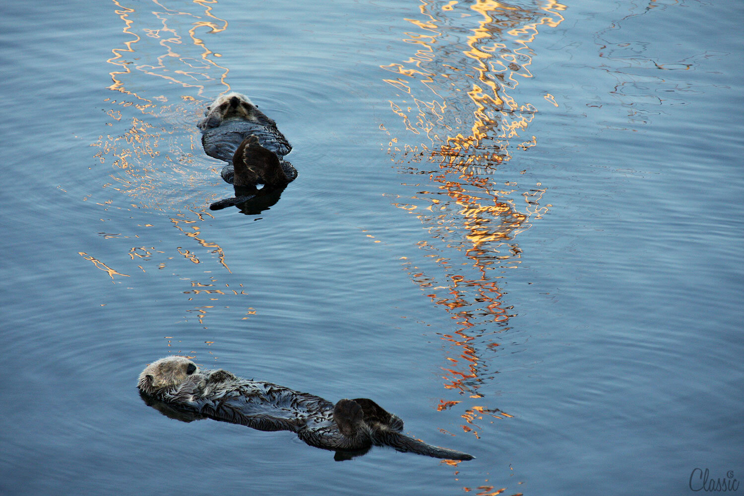 morro-bay-sea-otters-napping19-chiaristyle.jpg