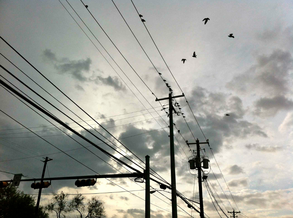 birds_on_wire_sunrise.jpg