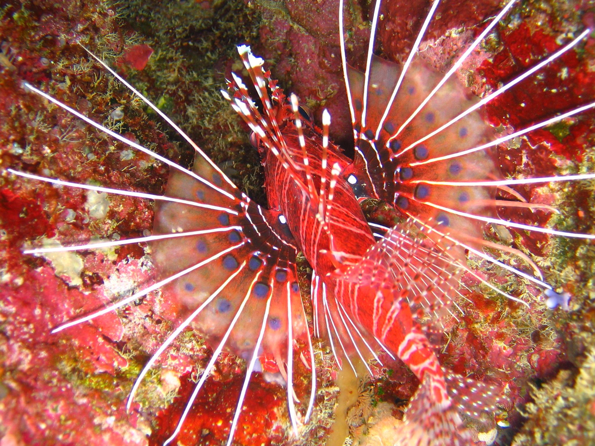 Fiji Zack 8 06 110.jpg