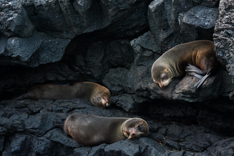 Galapagos2015-08-272413.jpg