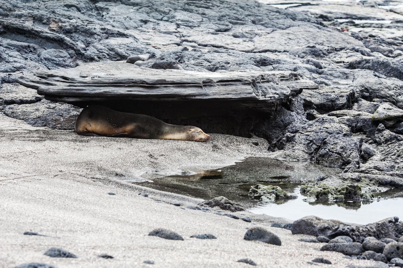 Galapagos2015-08-272338.jpg