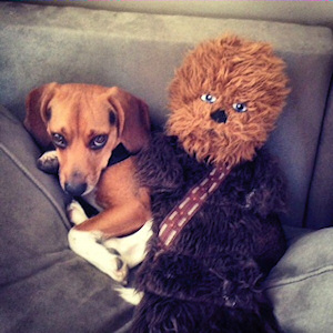 Chewy and Chewy