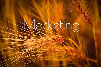 RedWinterWheatTrials_FrancesBuerkensMarketing-Marketing.jpg