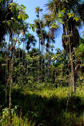 Aguajal (Home of the 26 foot anaconda!)