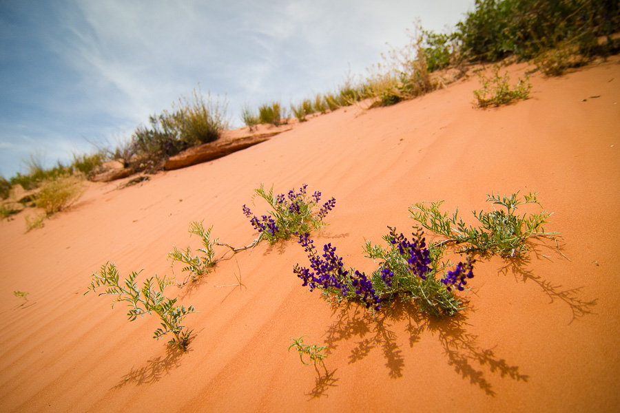 The desert was bursting with blooms upon our arrival.