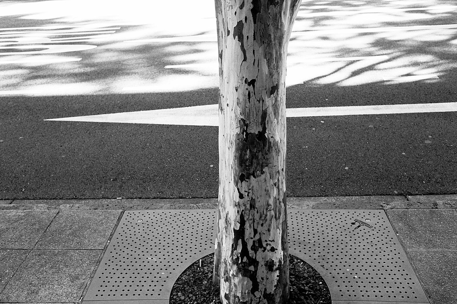 Leica M9P TriX-2.jpg