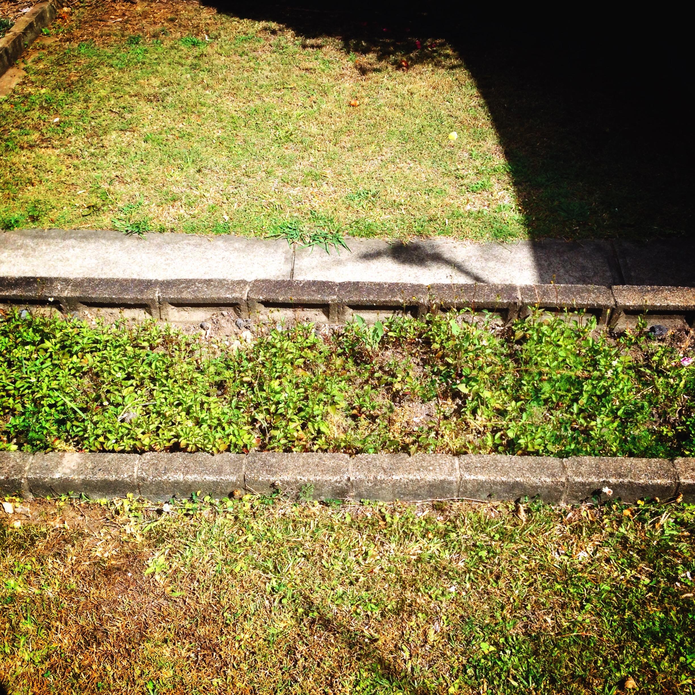 2 My Lawn 800Z.JPG