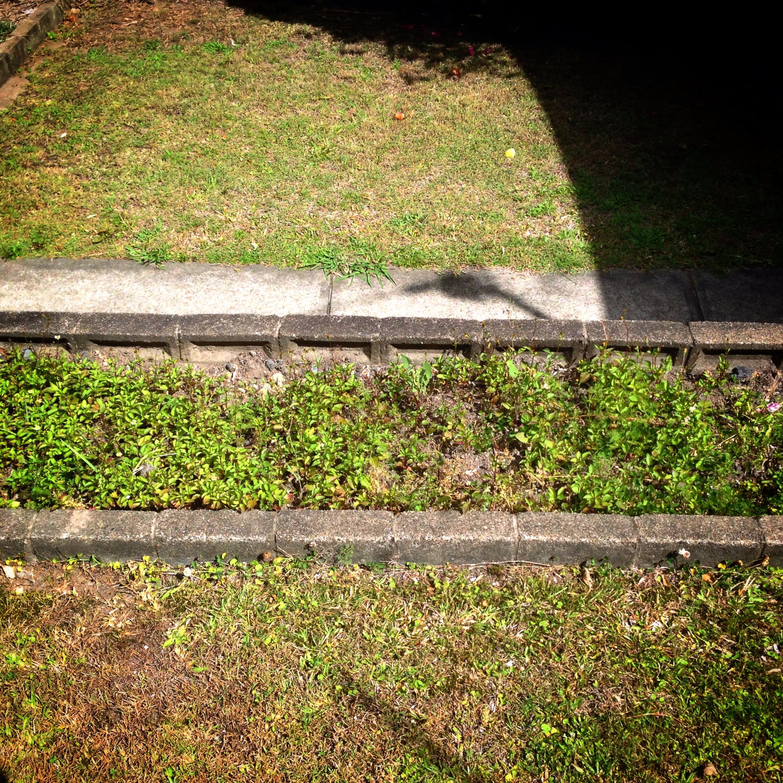1 My Lawn Original.JPG