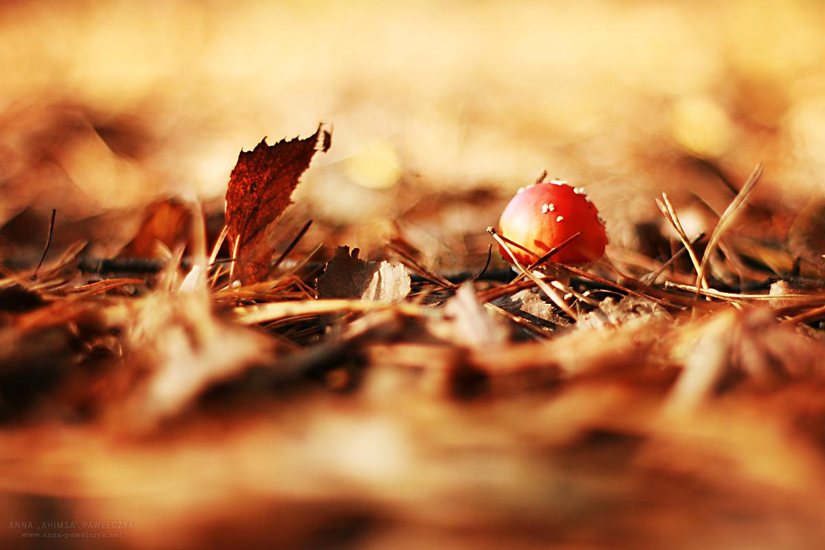 image byAnna Pawełczyk