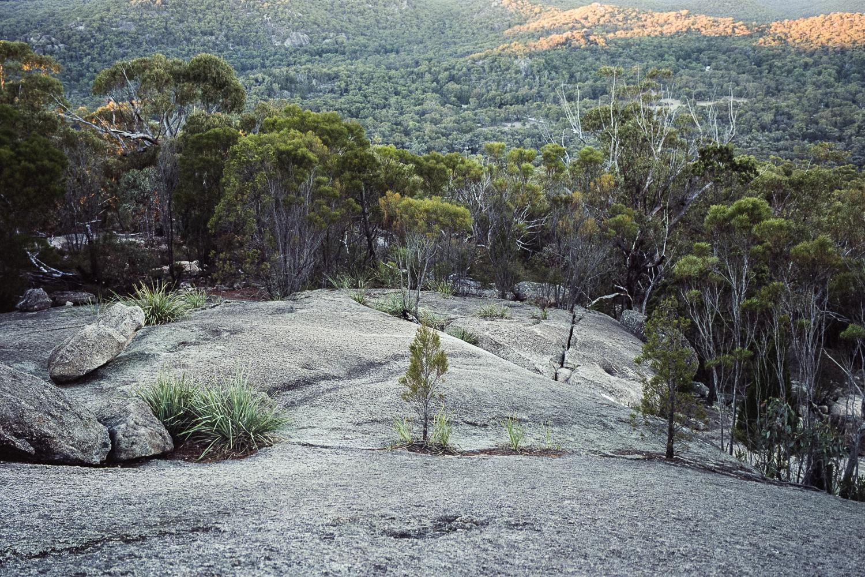 20180521+-+Roll+187+-+018-Nick-Bedford,-Photographer-Camping,+Girraween+National+Park,+Kodak+Portra+160,+Landscape+Photography,+Leica+M7,+Queensland,+Voigtlander+35mm+F1.7+Ultron+Asph.jpg