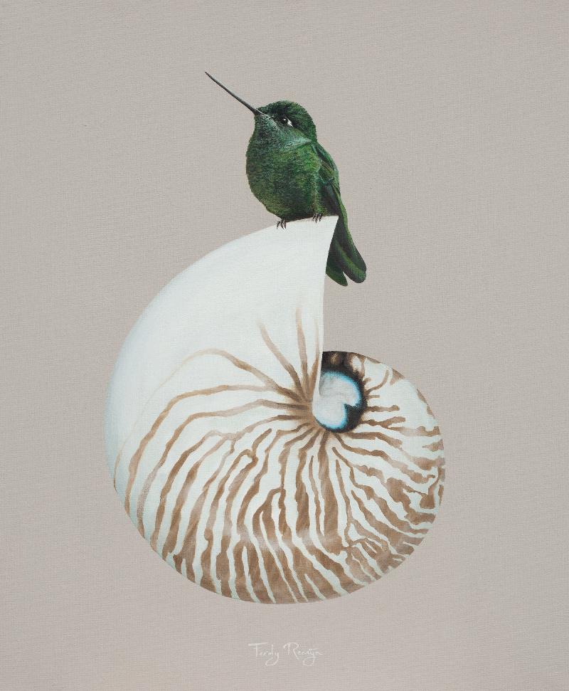 kolibrie_schelp_lagune_-_nautilus_ferdy_remijn_hummingbird_shell_1.jpg.jpg