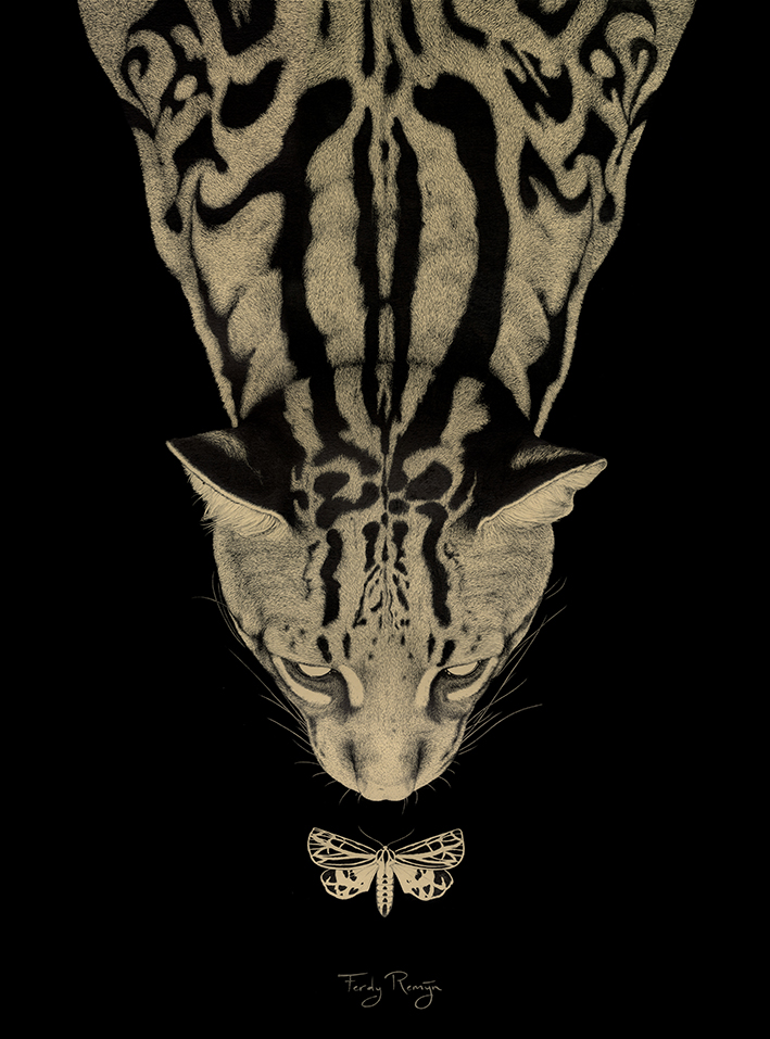 ocelot_nacht_vlinder_mot_night_meeting_ferdy_remijn_1.jpg